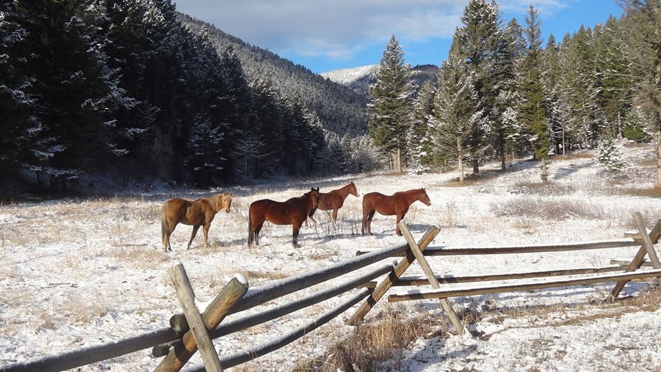 Horses in Little Belt Mountains MT by Jason Gray